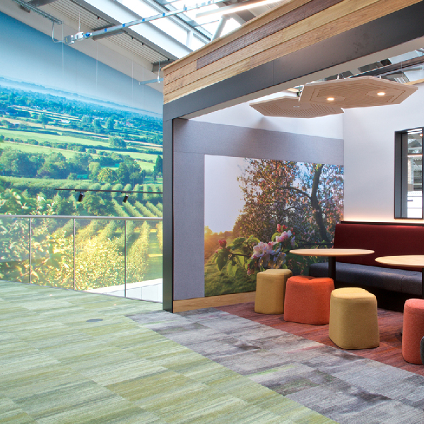 Wall graphic an acoustic wall covering and honey comb ceiling acoustics
